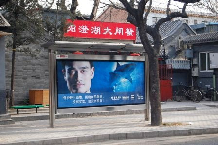 yao ming sharks fin soup campaign