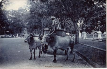 ox water cart